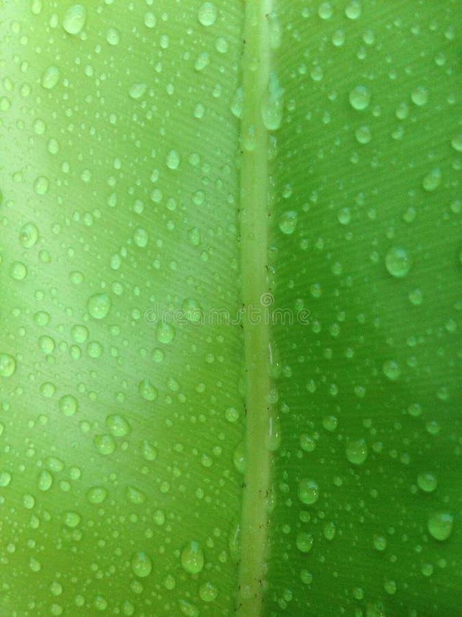 zielony liść z kropli wodą zdjęcie stock