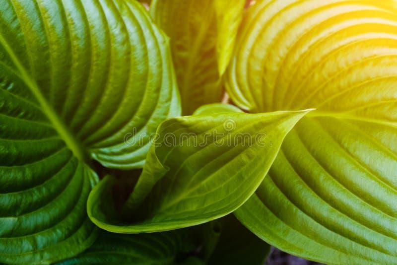 Zielony liść z wod kroplami dla tła zdjęcia royalty free