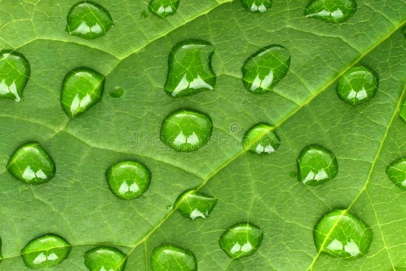 Zielony liść z wodnymi kroplami zdjęcia stock