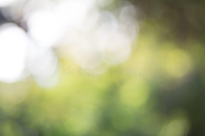 Zielony liścia bokeh tło, abstrakcjonistyczny tło zdjęcie royalty free