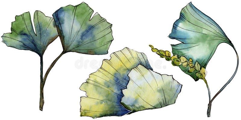 Zielony liścia ginkgo Liść rośliny ogródu botanicznego kwiecisty ulistnienie Odosobniony ilustracyjny element royalty ilustracja