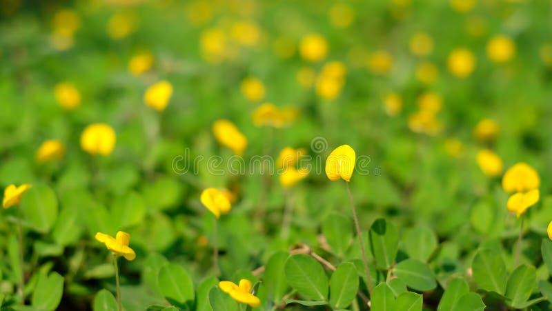 Zielony liścia i koloru żółtego kwiatów tło deszczowy dzień zdjęcie stock