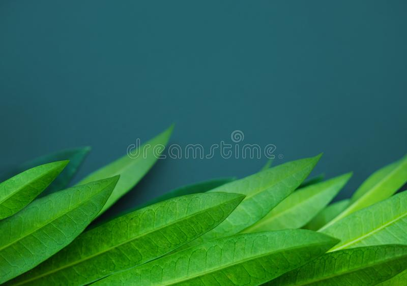 Zielony liścia tło, przestrzeń dla teksta i obraz royalty free