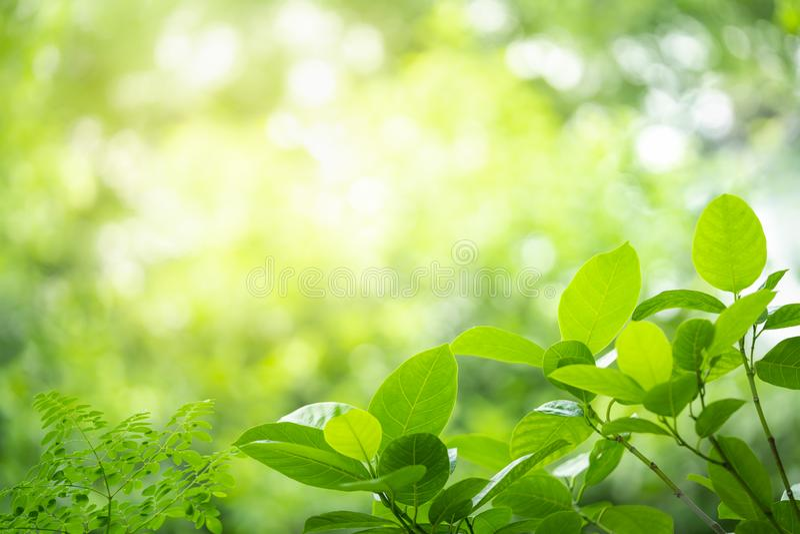 Zielony liścia tło z defocused skutkiem obraz royalty free
