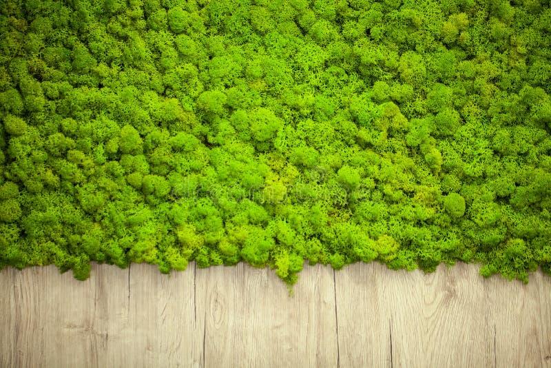 Zielony liszaj Mech ściana w moder piękna studiu obrazy royalty free