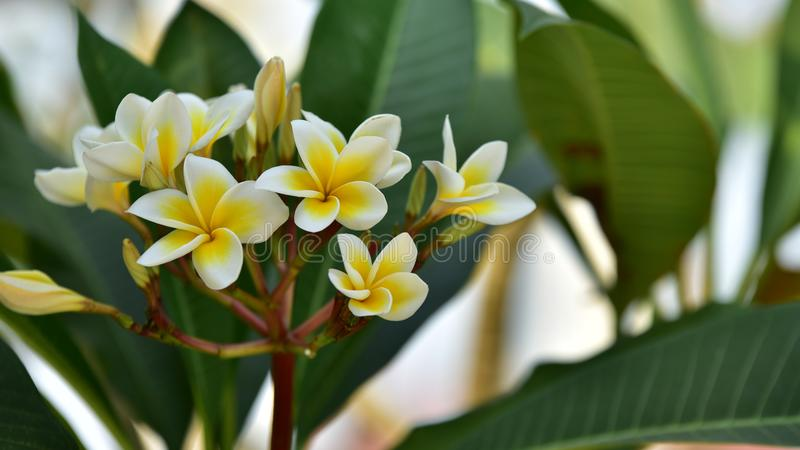 Zielony mały kwiat i drzewo przy zmierzchem zdjęcia stock