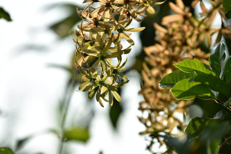 Zielony mały kwiat i drzewo przy zmierzchem obraz royalty free