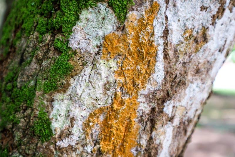 zielony mech i pomarańcze grzyb r na drewnie ukazuje się w podeszczowych pierwszych planach obrazy royalty free
