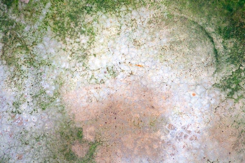 Zielony mech liszaj Na starych krekingowych szarość cementuje podłogi obraz royalty free