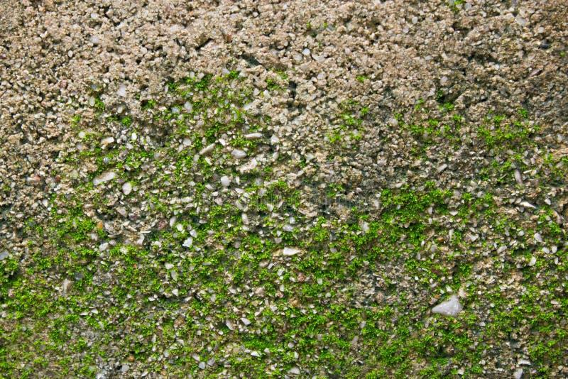 Zielony mech na ściennej teksturze fotografia royalty free