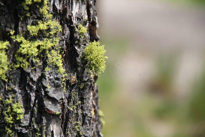 Zielony mech na Drzewnym bagażniku 3 obraz royalty free