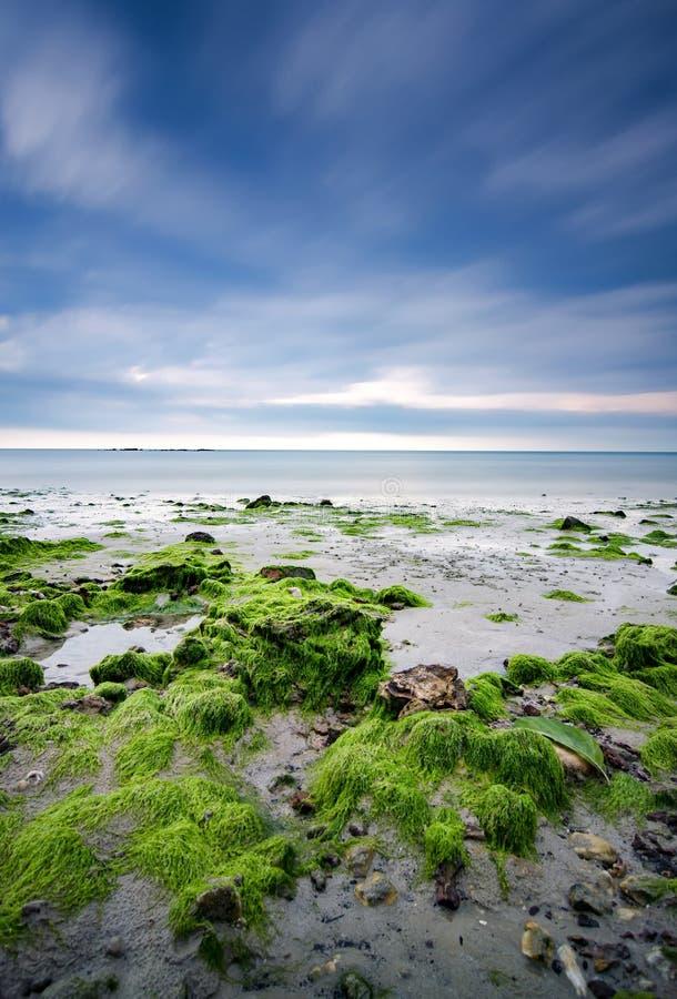 Zielony mech na plaży skale nad dramatycznymi ciemnymi chmurami obrazy stock