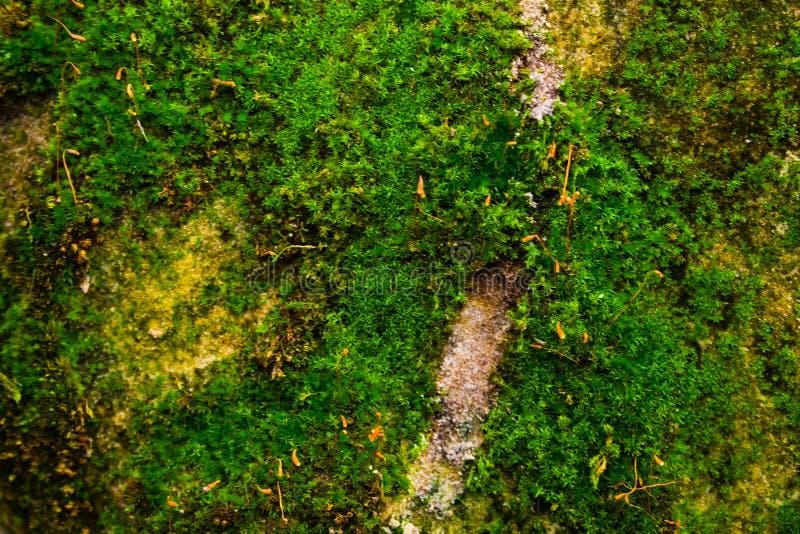 Zielony mech na szarej kamiennej ścianie obraz royalty free