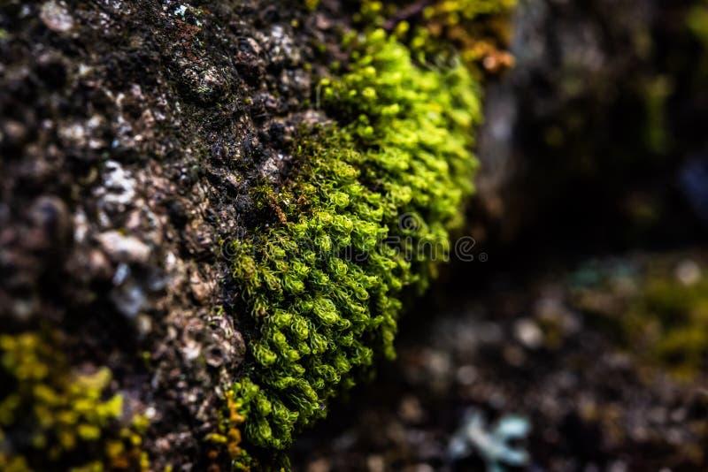 Zielony mech w tropikalnym lesie tropikalnym obraz royalty free
