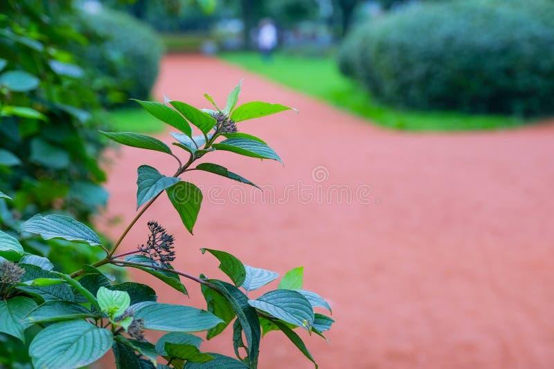 Zielony miasto park miasto park z starannymi chodzącymi ścieżkami dla wczasowiczek zdjęcia royalty free