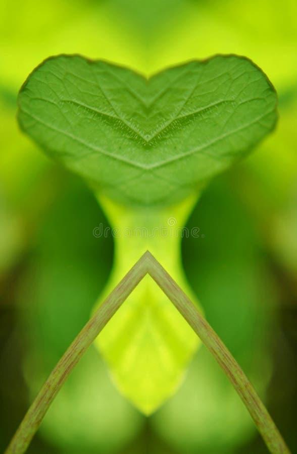 Zielony nasturcja liścia kolaż zdjęcie royalty free