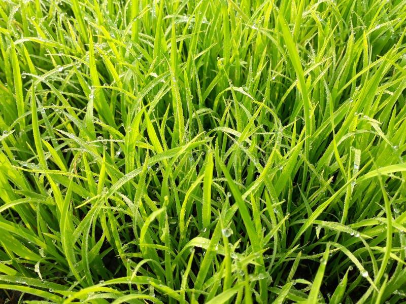 Zielony natura obrazek obrazy royalty free