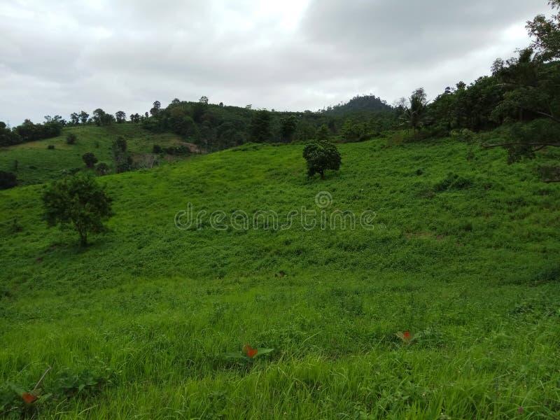 Zielony natury wzgórza panoramy widok fotografia royalty free