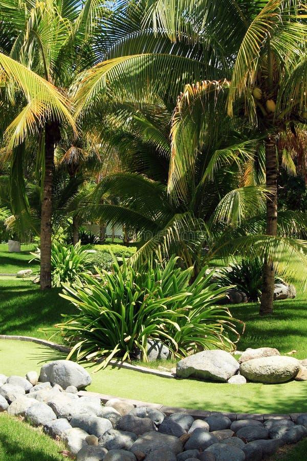 zielony ogród pat tropical obraz royalty free