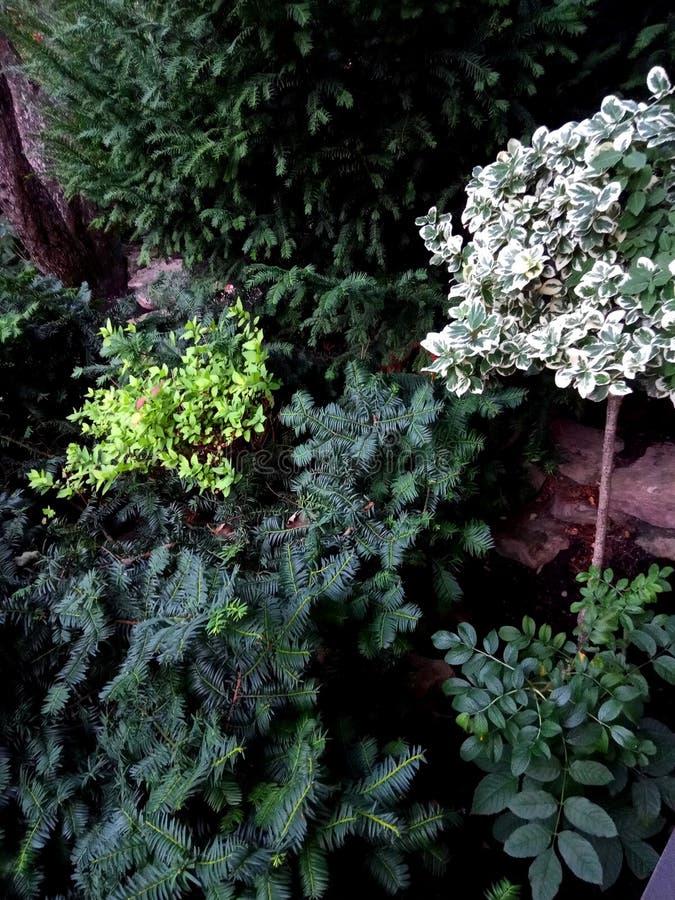 Zielony ogród przy jakaś czasem rok obraz royalty free