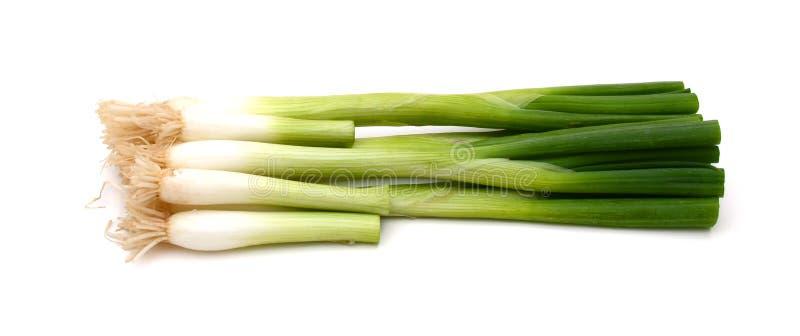 Zielony onions obraz royalty free