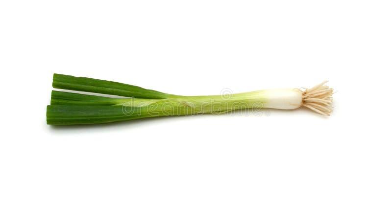 Zielony onions obrazy stock