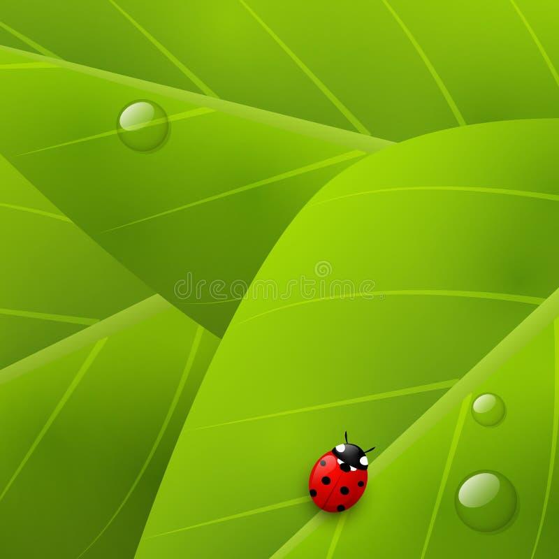 Zielony organicznie tło ilustracji
