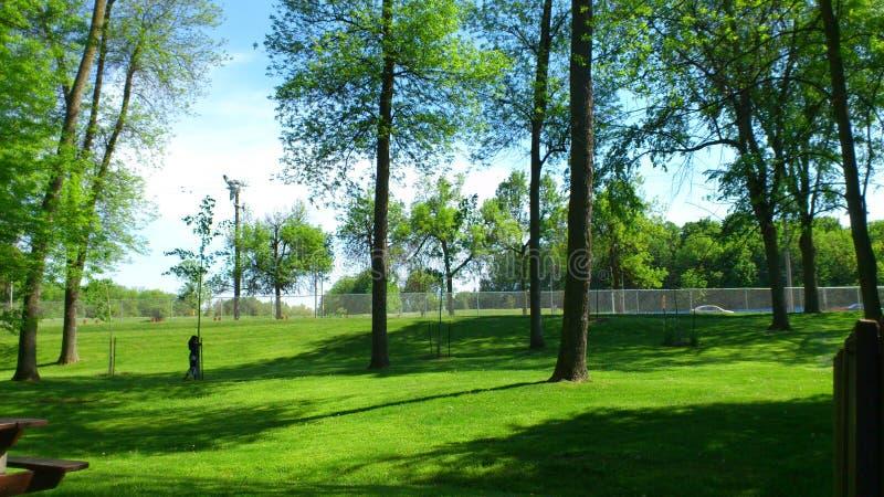 Zielony park zdjęcie royalty free