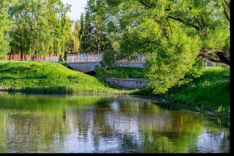 Zielony park z drzewami i rzeką Pogodny wakacje obrazy stock