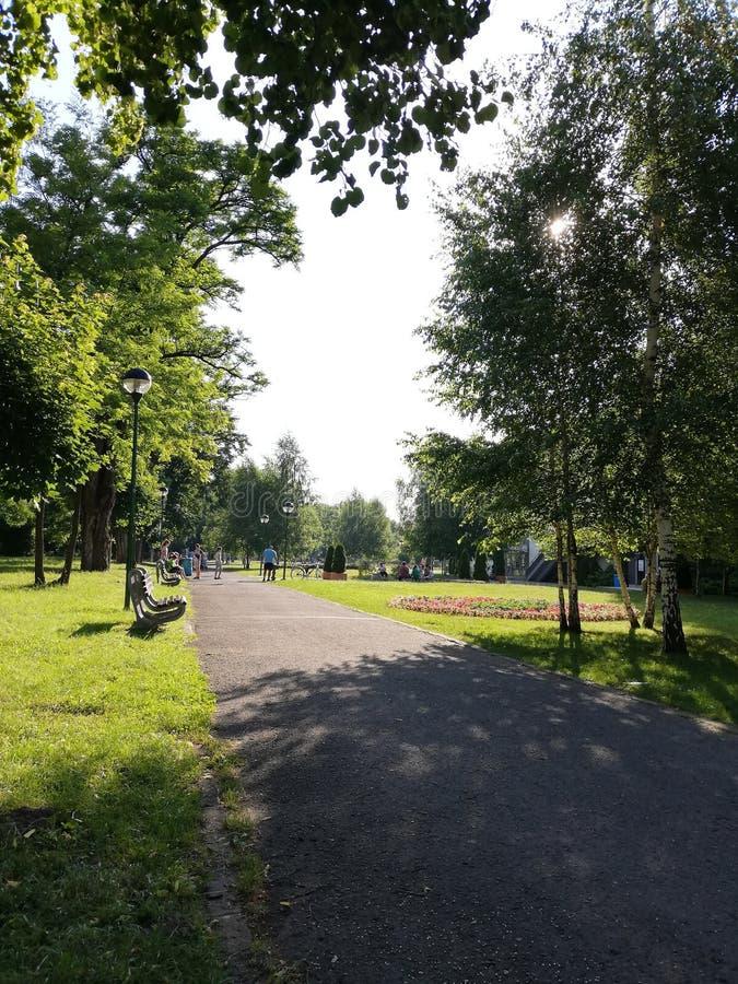 Zielony parkowy Brașov lato zdjęcie stock