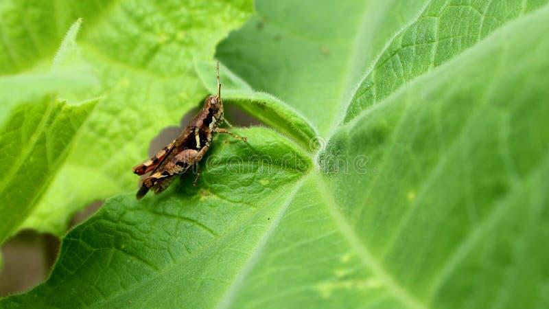 zielony pasikonika liść zdjęcie stock