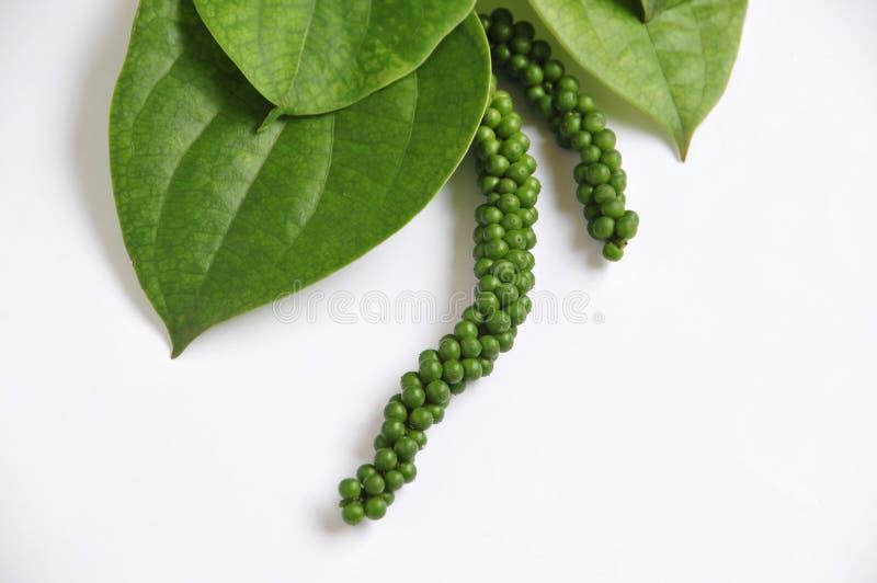 zielony pieprz zdjęcie stock