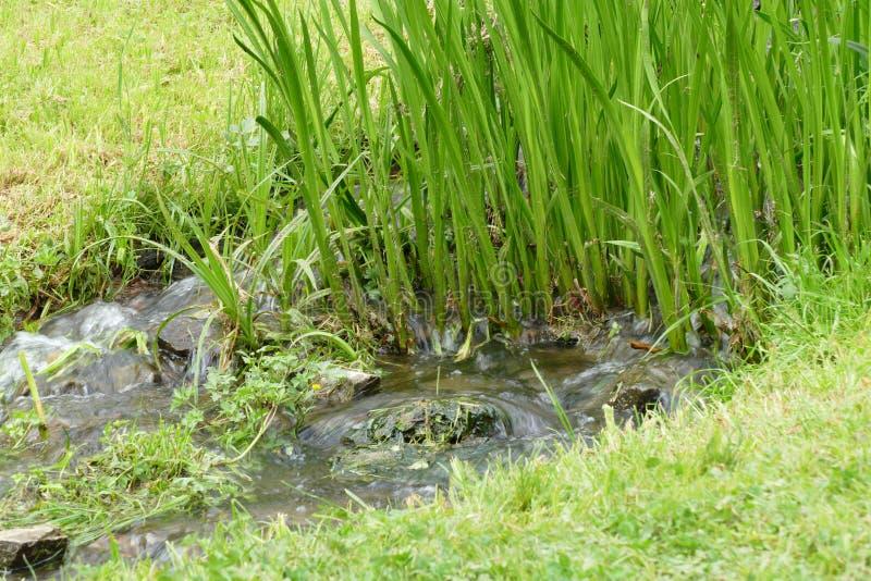 Zielony pośpiech zdjęcie stock