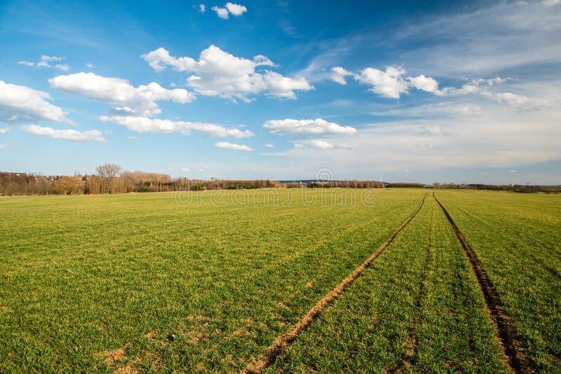 Zielony pole i piękne chmury dzieliliśmy płaskim horyzontem, republika czech fotografia stock