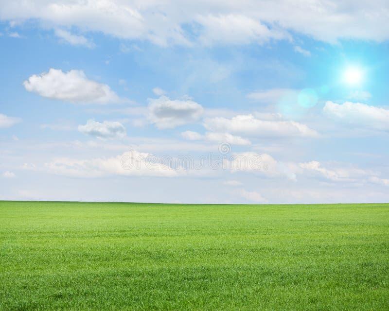 Zielony pole na pogodnym letnim dniu fotografia royalty free
