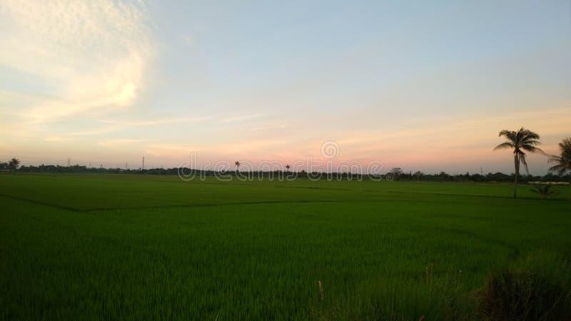 Zielony pole pod różowym zmierzchu niebieskim niebem obrazy royalty free