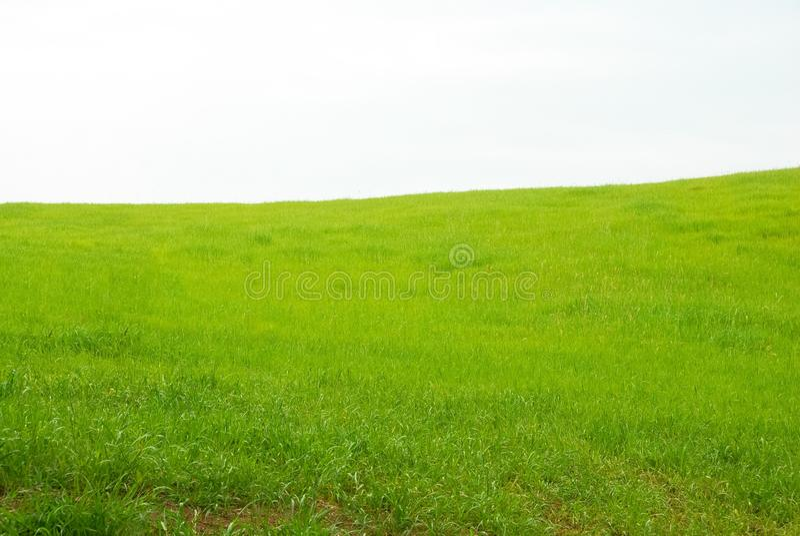 Zielony pole trawa w Włochy obrazy royalty free