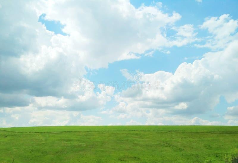 Zielony pole w wiośnie na ciepłym chmurnym dniu zdjęcia royalty free