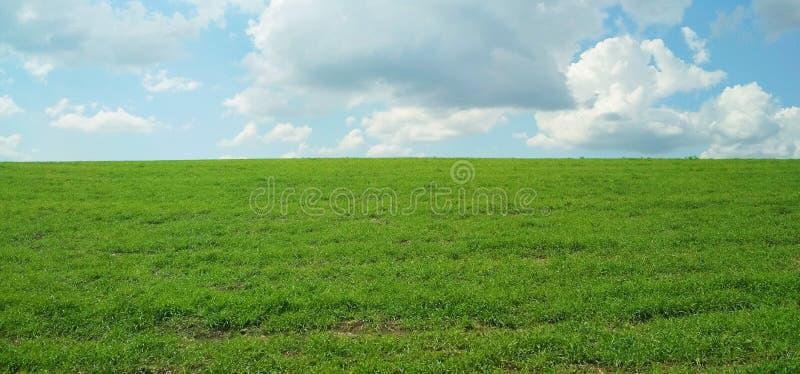 Zielony pole w wio?nie na ciep?ym chmurnym dniu fotografia royalty free