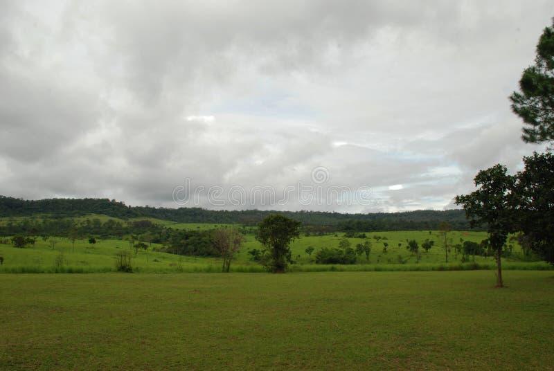 Zielony pole z chmurnym niebem zdjęcie royalty free