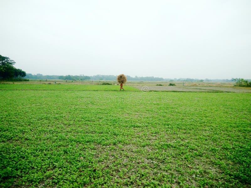 Zielony pole z pracujący ludzi obrazy stock