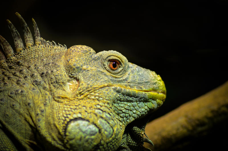 zielony potwór fotografia stock