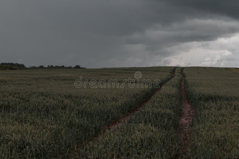 Zielony pszeniczny pole z lasem w tle na chmurnym dniu obraz stock