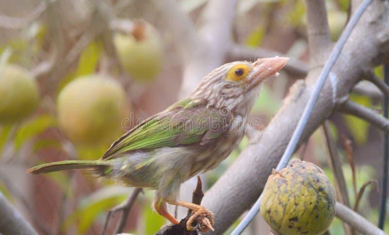 Zielony ptak obraz royalty free