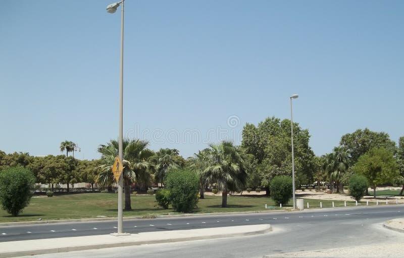 Zielony roślinności dorośnięcie W saudyjczyku - arabska pustynia fotografia royalty free