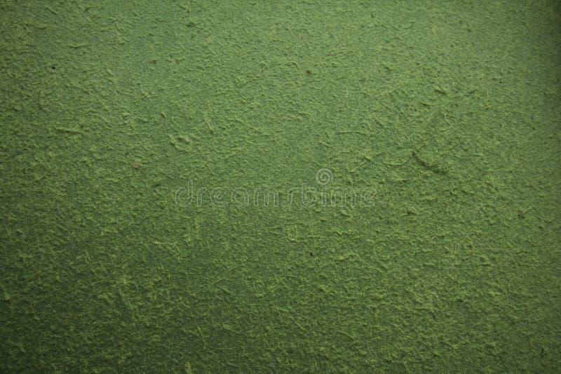 Zielony Sa papier obrazy stock