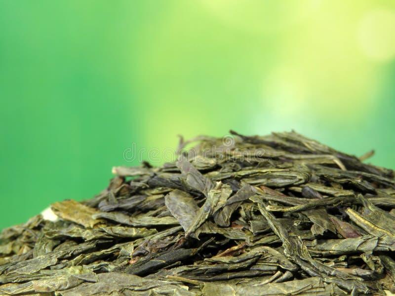 Zielony Sencha herbacianych liści zbliżenie zdjęcia royalty free