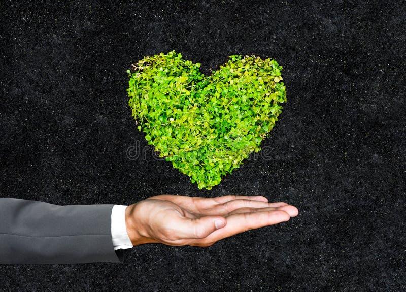 zielony serce fotografia royalty free