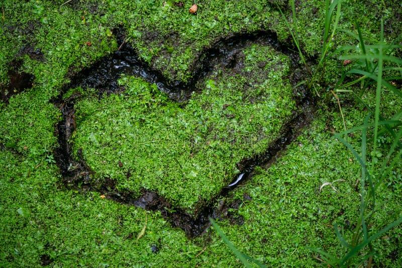 Zielony serce w bagna ziemi Życzliwy symbol i natura fotografia stock