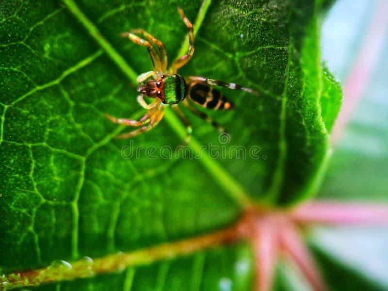 zielony skokowy pająk kosmos kopii fotografia stock